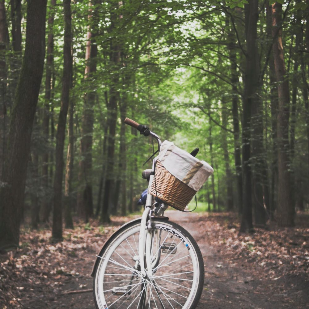 city-bicycle-in-the-middle-of-forest-trail-1239460